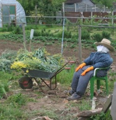 Millfield_allotment_2_2